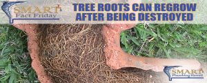 SMART Fact Friday: Tree Roots Can Regrow After Being Destroyed