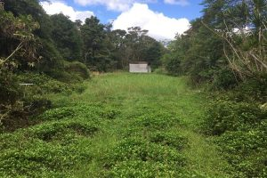 Lightly Forested land-Lot # 4