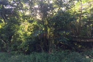 12,040 sqft vacant land parcel in Hawaiian Shores
