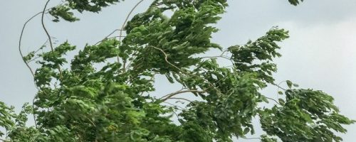 How to Help Safeguard Your Home Against Windstorms