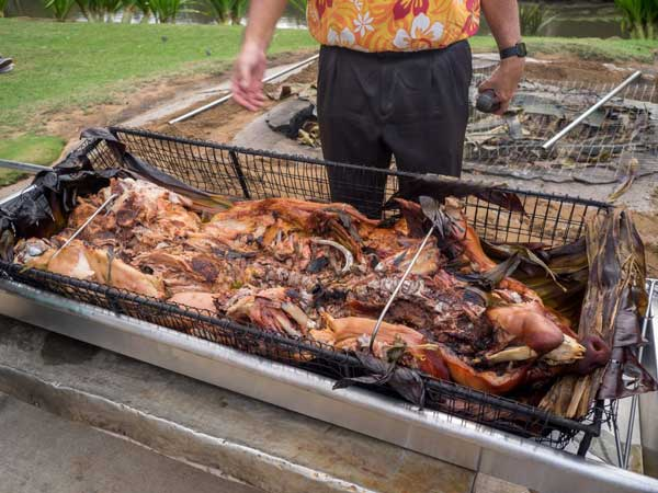 Pig freshly removed from underground pit and Hawaiian luau. Kalua style pig is a staple of the luau.
