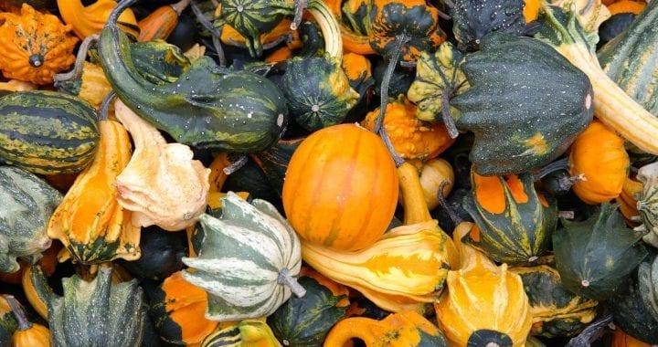 pumpkins-228474_1280