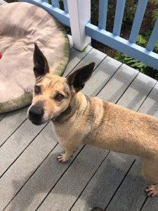 Adopt A Pet: Meet Brody