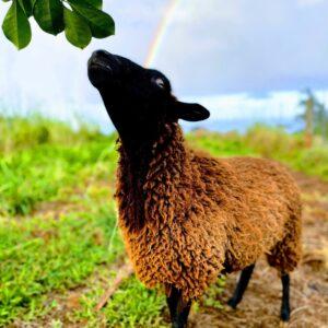 Magical Creatures of Hamakua Farm Animal Rescue & Sanctuary