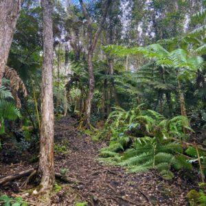 Kaloko Trail