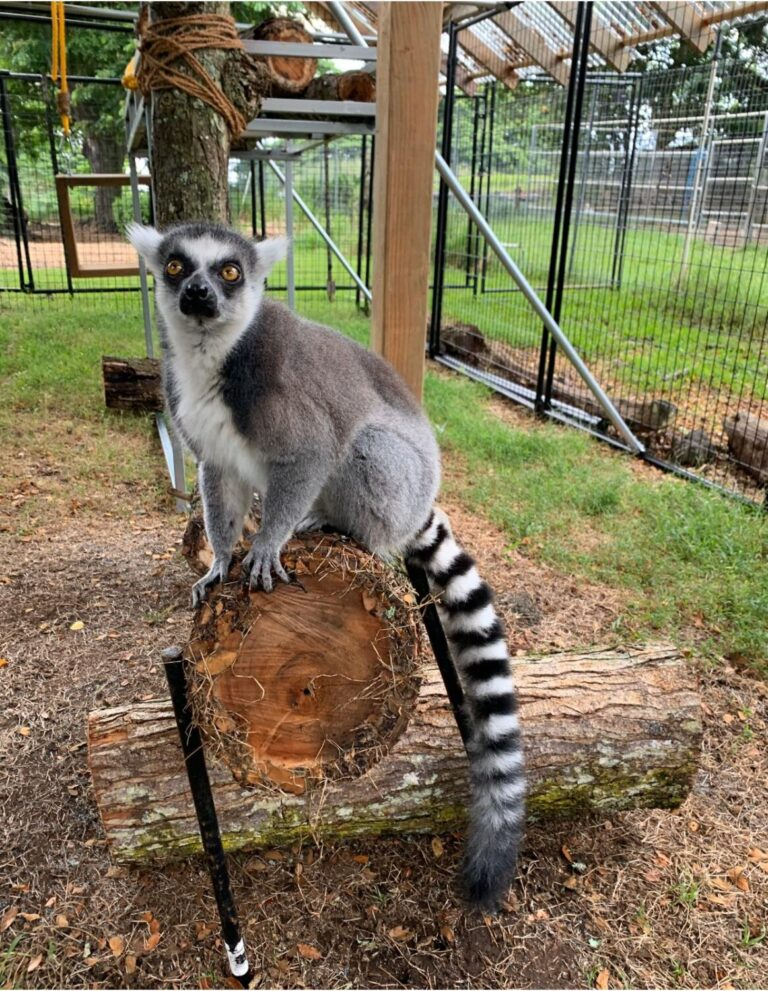 Three Ring Ranch Exotic Animal Sanctuary