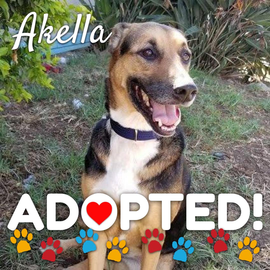 akella-adopted