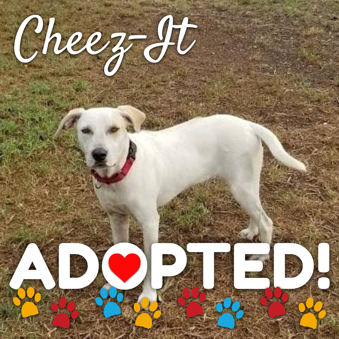cheez-it-adopted