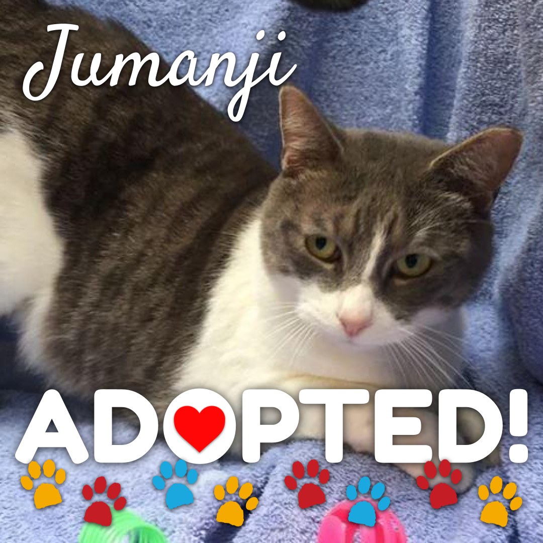 jumanji-adopted
