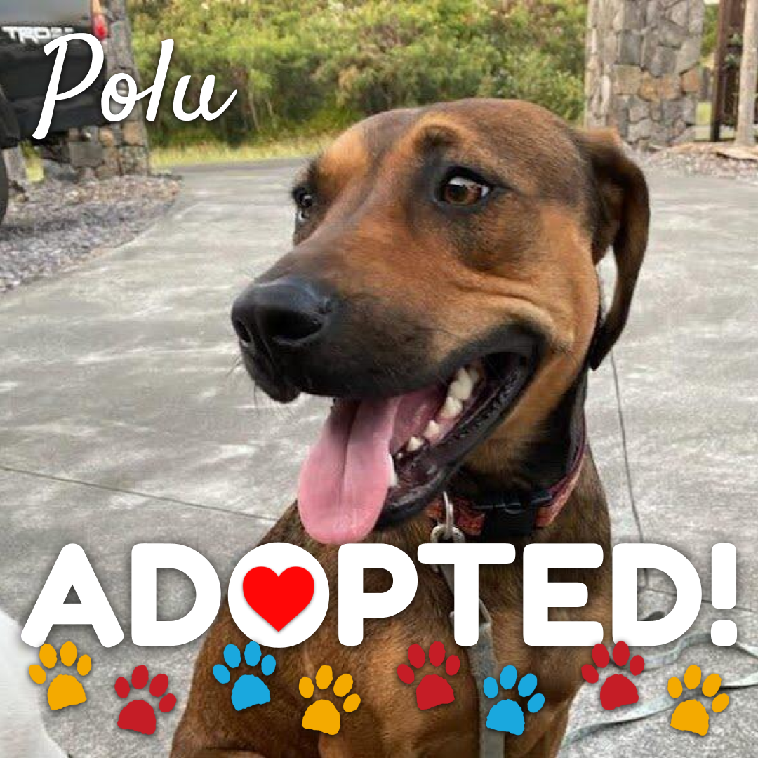 polu-adopted