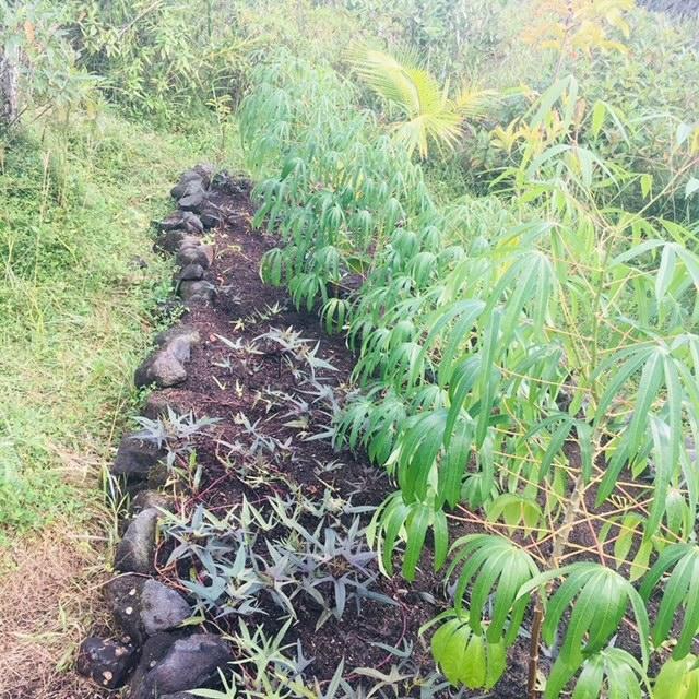 farming land farms
